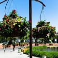 写真: 吊り花壇
