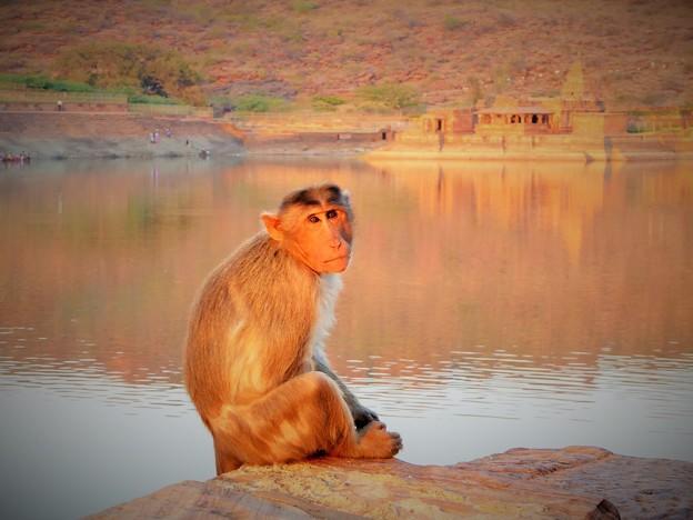 アガスティア池の神猿と寺~インド Monkey & Temples