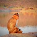 写真: アガスティア池の神猿と寺~インド Monkey & Temples
