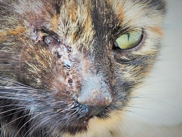 紅の涙~トルコ Stray Cat with One Eye