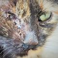 Photos: 紅の涙~トルコ Stray Cat with One Eye