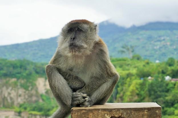 Photos: とかくにこの世は住みにくい~インドネシア Wild monkey       ☆我思う 故に我あり 夏木蔭
