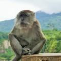 写真: とかくにこの世は住みにくい~インドネシア Wild monkey       ☆我思う 故に我あり 夏木蔭