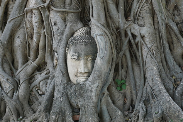 精霊の宿る樹~タイ Buddha head in tree roots