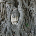 Photos: 精霊の宿る樹~タイ Buddha head in tree roots
