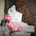 Photos: 聖テレサに捧げる薔薇~スペイン Gate Alcazar
