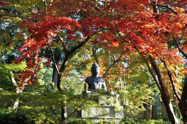紅葉の天蓋~京都栄摂院 Autumn Foliage Canopy