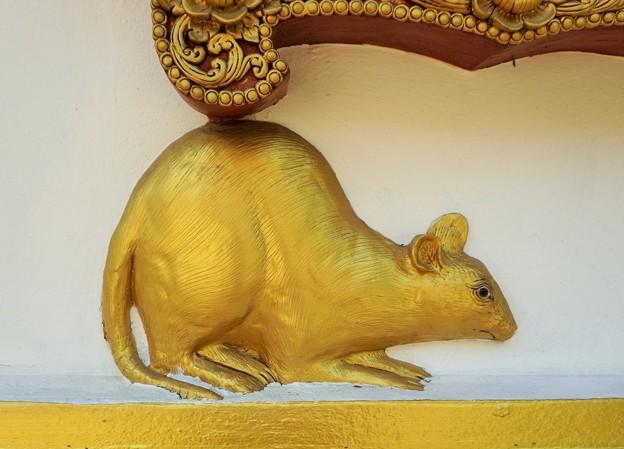 謹賀子年~タイ Golden Mouse,Chiang Rai