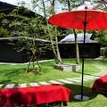 Photos: 木漏れ日の林泉~瑜伽山園地 Yugayama Garden