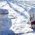 写真: 残雪の散歩