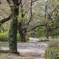 写真: 桜小径