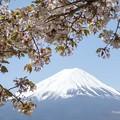 写真: 富士山と桜