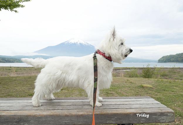 写真: 富士山を背負う