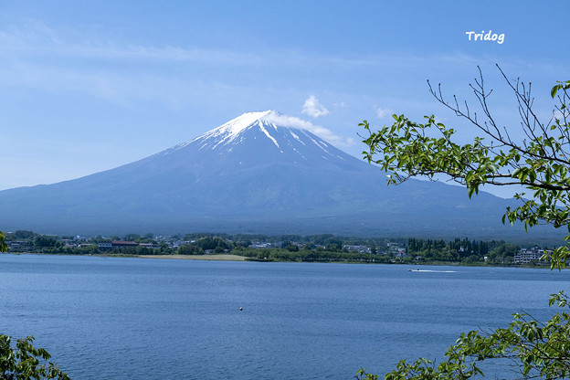 5月の富士山