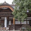 写真: ムクロジと深大寺