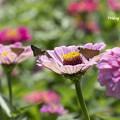 写真: flower for two