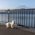 写真: 朝の散歩