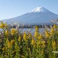 写真: 秋の河口湖畔