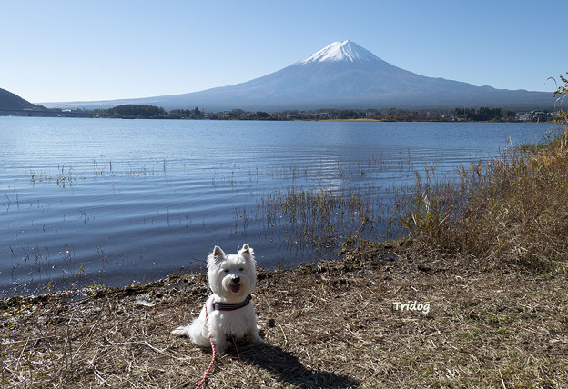 富士山といっしょに