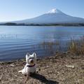 写真: 富士山といっしょに