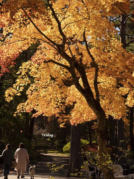 Photos: 秋の一日