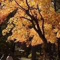 写真: 秋の一日