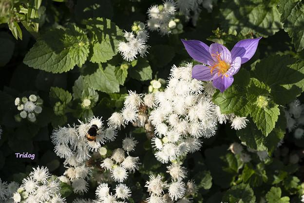 白と紫の花