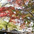 Photos: 山門下の紅葉