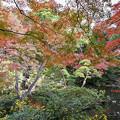 写真: 殿ヶ谷戸庭園