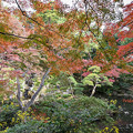 Photos: 殿ヶ谷戸庭園