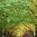 写真: 緑から黄色に