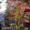 写真: 高尾山