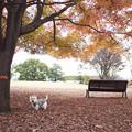 写真: 散歩道の紅葉