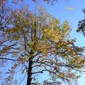 写真: 高い木