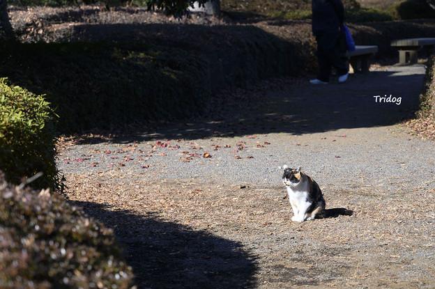 植物園ネコ