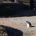 写真: 植物園ネコ
