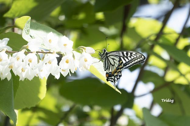 白い雲と蝶