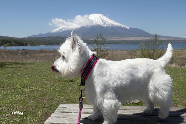 富士山と一緒