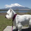 Photos: 富士山と一緒