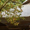 Photos: キンモクセイ香る山寺