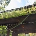 Photos: 山門の屋根