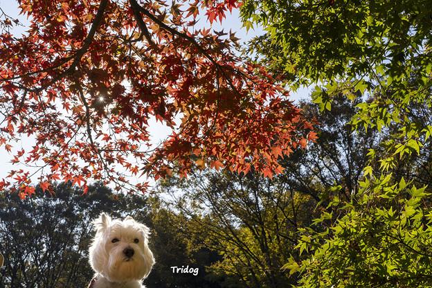 Photos: 散歩道の紅葉