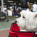 Photos: Westie Party!