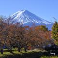 Photos: 桜紅葉と富士山