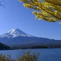 Photos: 銀杏と富士