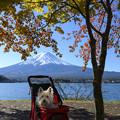 Photos: 湖畔の秋
