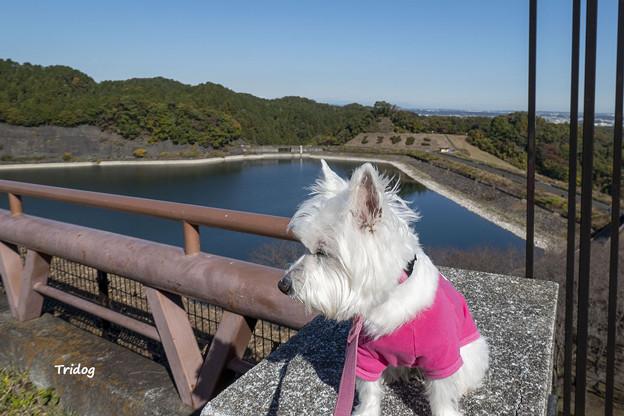 Photos: 城山湖