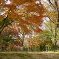 Photos: 散歩道の彩り