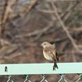 Photos: 初撮りは鳥です。