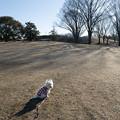 Photos: 冬枯れの散歩